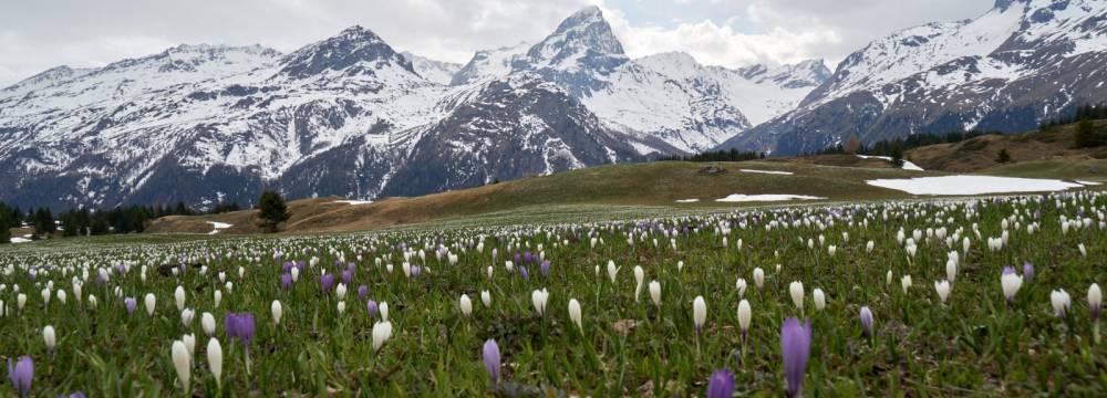 Berghaus Piz Platta (Alp Flix) in Sur