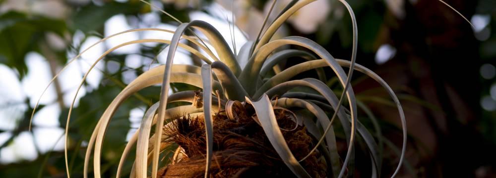 Tropepflanzen Restaurant Florida in Studen